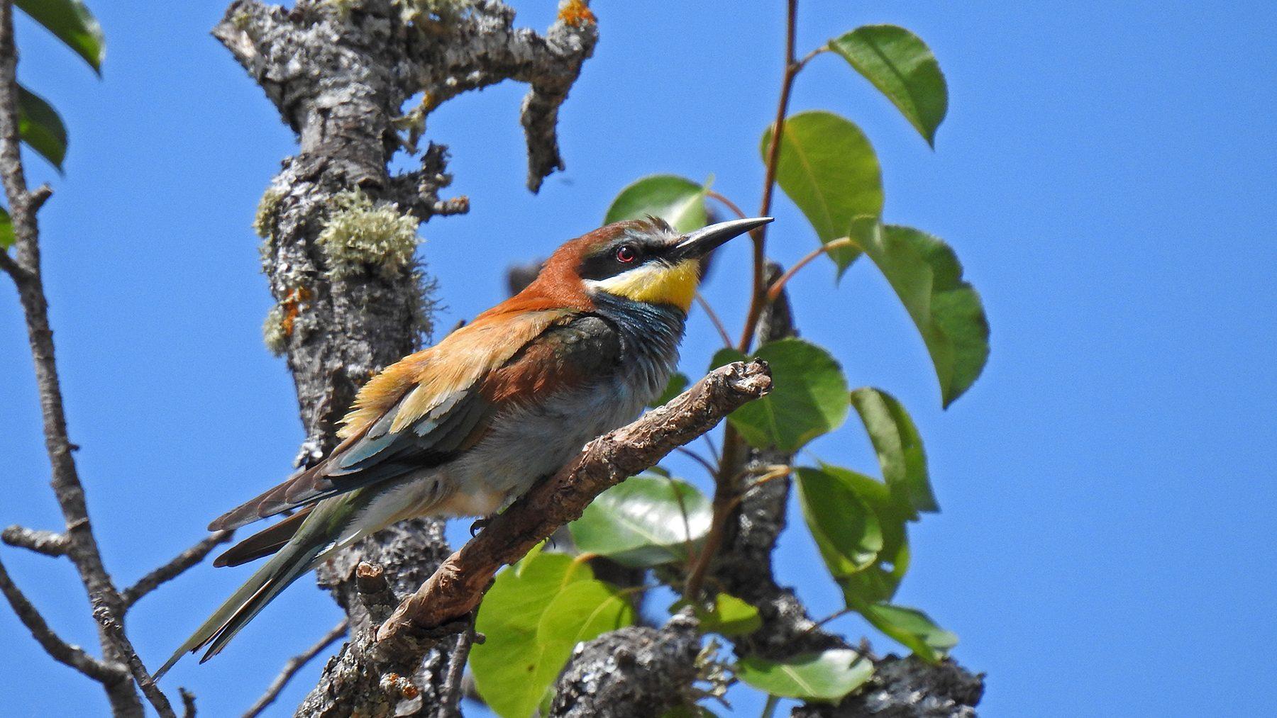 Andalucia Bird Society